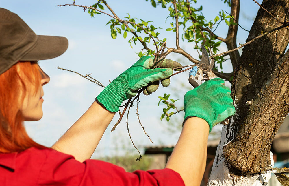 Best Time to Prune Trees